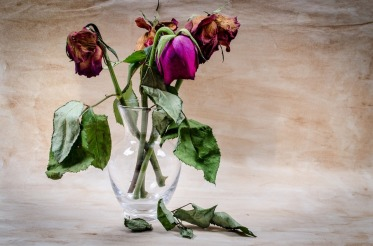 layu mawar